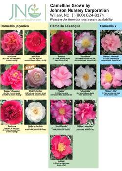 Camellia Chart