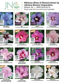 Rose of Sharon Chart