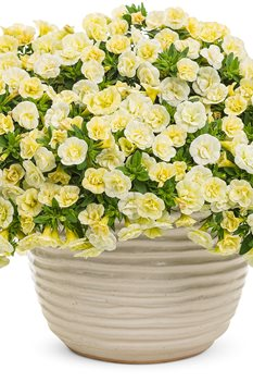 /Images/johnsonnursery/product-images/superbells_double_chiffon_mono_3qf8wrhqt.jpg