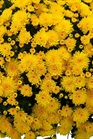 /Images/johnsonnursery/product-images/Malmo_yellow_6zqdtet2q.jpg