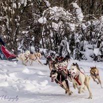 Alaska Dog Mushers Association - 1