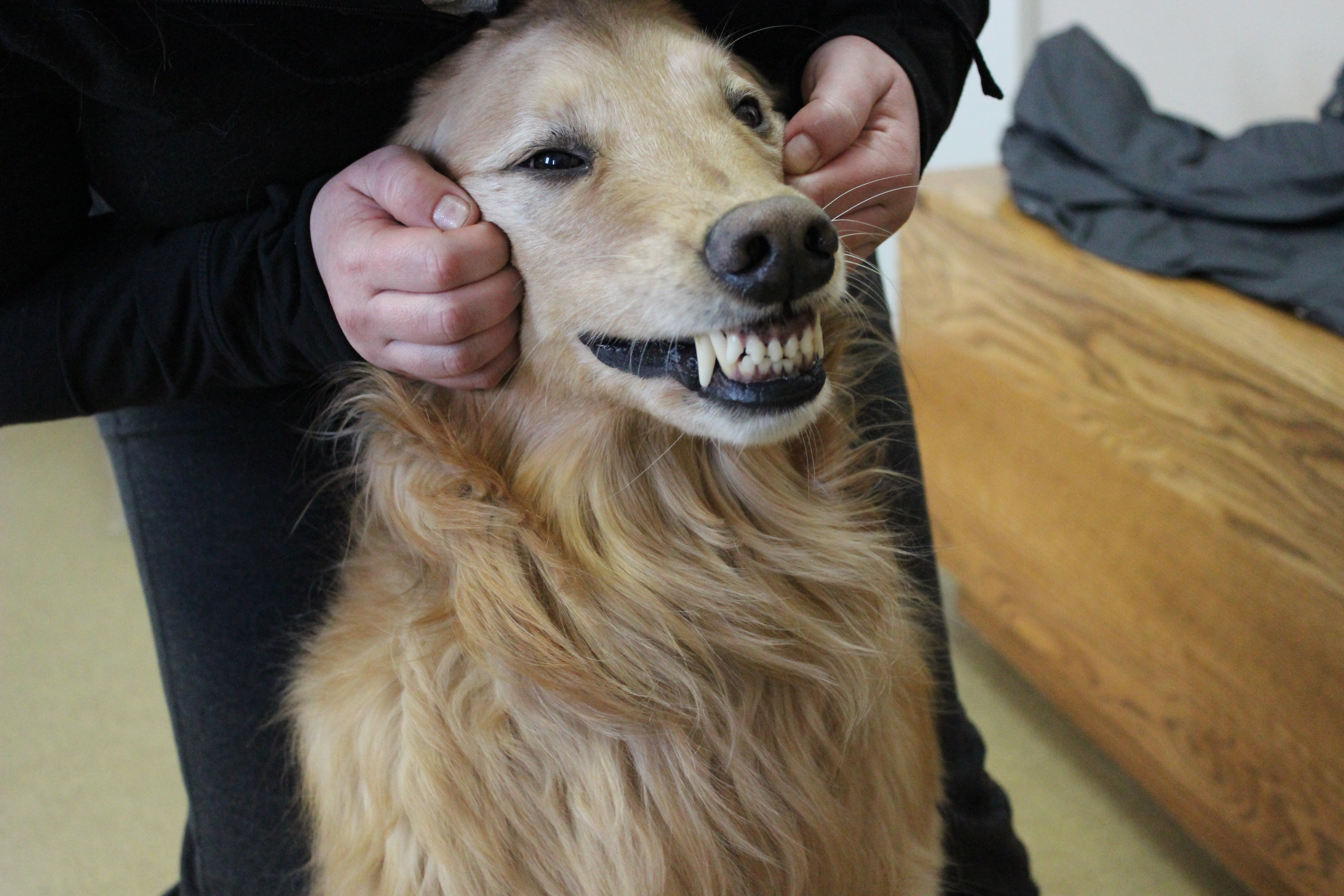 February is dental health month for pets!
