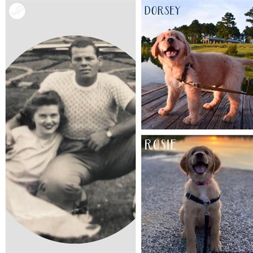 DORSEY & ROSIE