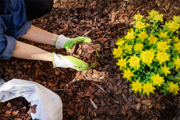 American Property Experts is your number one source for recycled bulk mulch in Wilmington, NC.